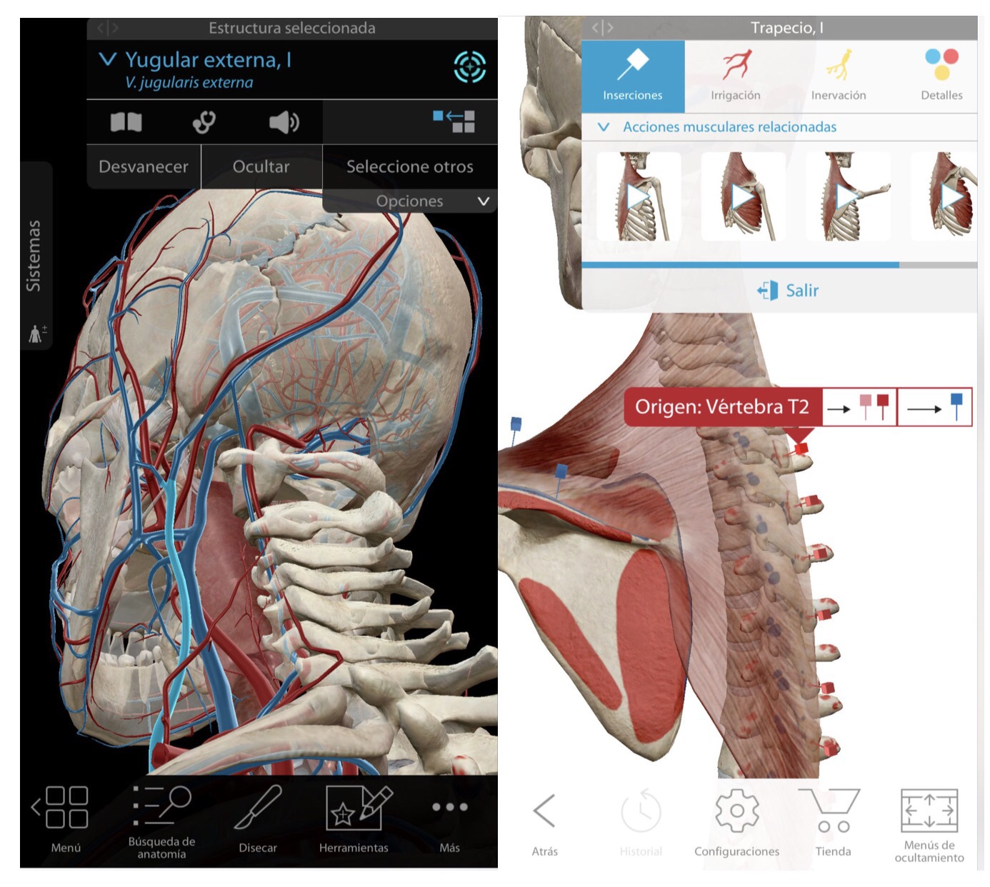 Lujoso Anatomía Aplicación Para Android Embellecimiento - Anatomía ...